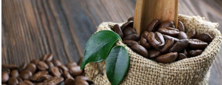 café en grano mexico